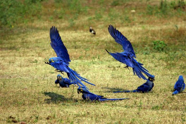 Aves (3)